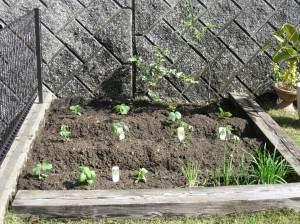 The veg plot